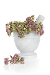 Valerian Herb Flowers