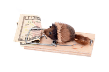 Mouse and money in tap, isolated on white background