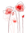 Red poppies on white background. Vector illustration - 39469924