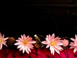 Asian spa supplies with pink water lily