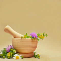 Herbal medicine or treatment background with camomile and tutsan