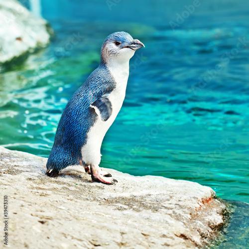 Leinwandbild Motiv Blue penguin