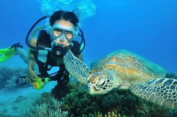 若い女性ダイバーとアオウミガメ