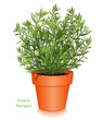 French Tarragon in Clay Flowerpot. For Fines Herbes, cooking.