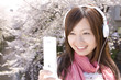 桜をバックに携帯のメールを確認する女性