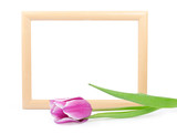 frame with tulip isolated on white 5(2).jpg