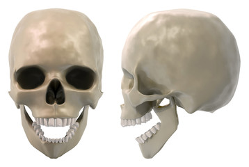 skull front and side jaw open