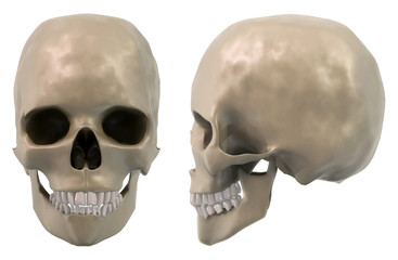 skull front and side