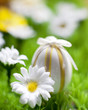 oeuf et fleur de printemps de pâques