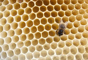 bee fills honeycombs