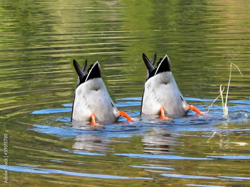 Aluminium Ezel Team Work, ducks in cooperation