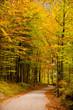 Foglie e colori in autunno