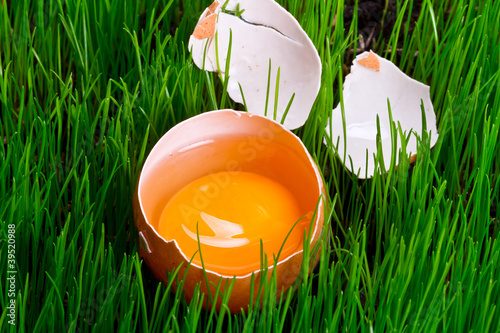 Yolk of an egg in the grass