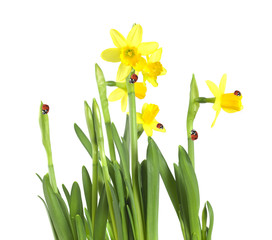 Lent lilys with ladybirds