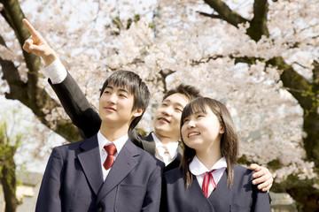 桜を見上げる教師と中学生2人