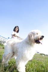 散歩をするゴールデンドゥードルと女の子