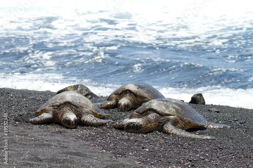 green sea turtles (Big Island, Hawaii)