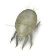 3d render of mite bug