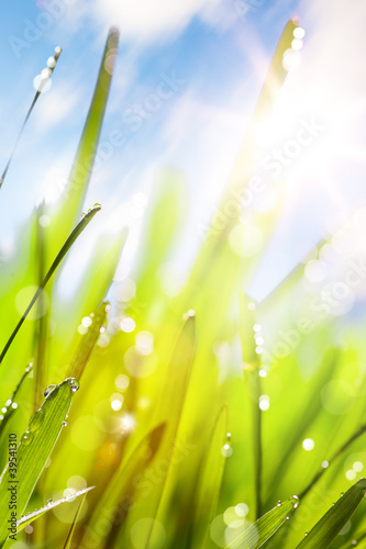 Spring abstract nature background