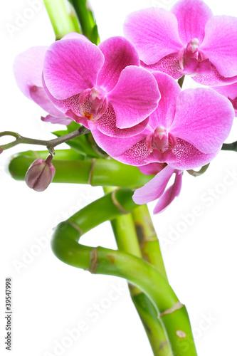 piekni-purpurowi-orchidea-kwiaty-i-bambus-odizolowywajacy