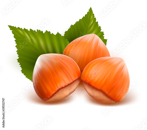 Filberts with leaves  Vector illustration