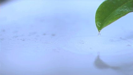 Rain on a leaf in super slow motion