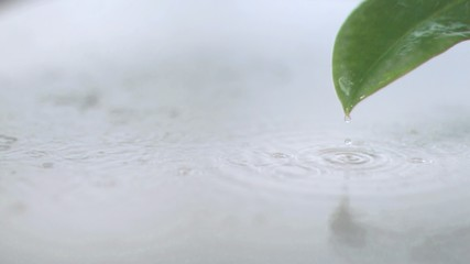Rain on leaf in super slow motion