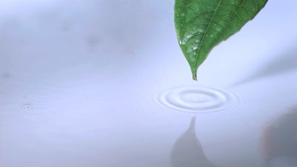 Droplet falling off leaf in super slow motion while it is raining