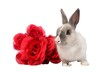 Bunny Rabbit and Roses