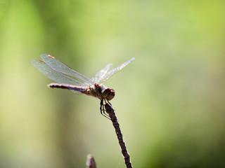 Dragonfly on a twig