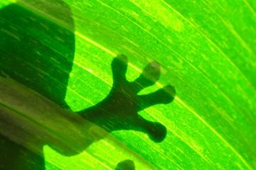 Frog resting on a leaf