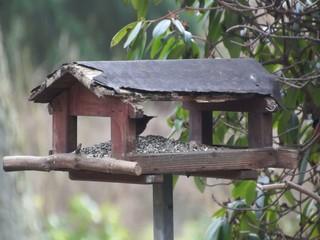 Video Vogel frisst im Vogelhäuschen