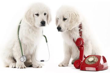 calling the vet