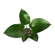 3d render of philodendron plant