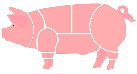 porco, peças de talho