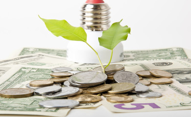 Energy saving lamp and money isolated on white