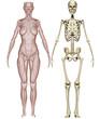 Muscoli e scheletro donna