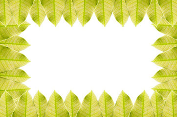 Green leaf frame isolated