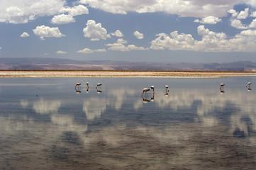 Chaxa Lagoon, Atacama Chile