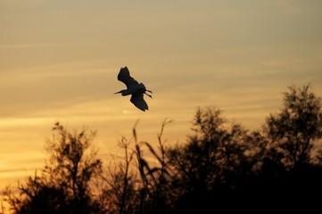 Ombre oiseau