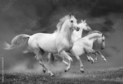 biegnace-konie-w-czerni-i-bieli