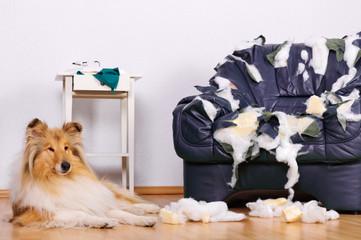 Langeweile eines Hundes