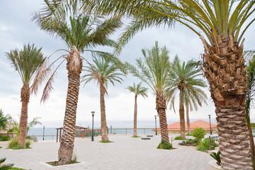 palm trees in resort on Dead Sea