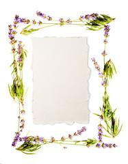 Lavender frame isolated on white