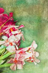 Vintage oleander frame