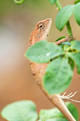 a brown lizard on the rose tree branch
