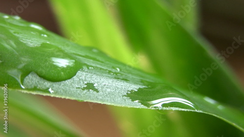 Water-drops on leaf