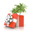 Palm tree from the gift box