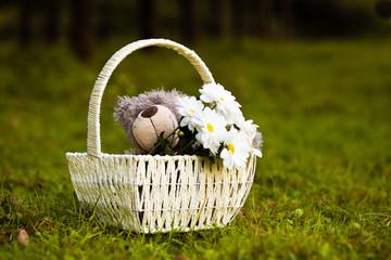 Daisies and teddy bear