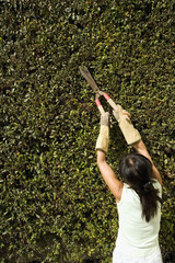 Asian woman pruning hedges